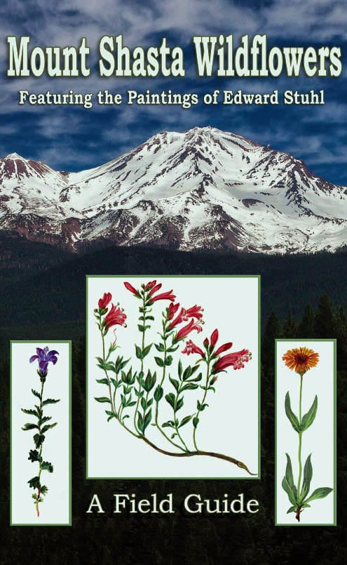 wildflowers_frontcover