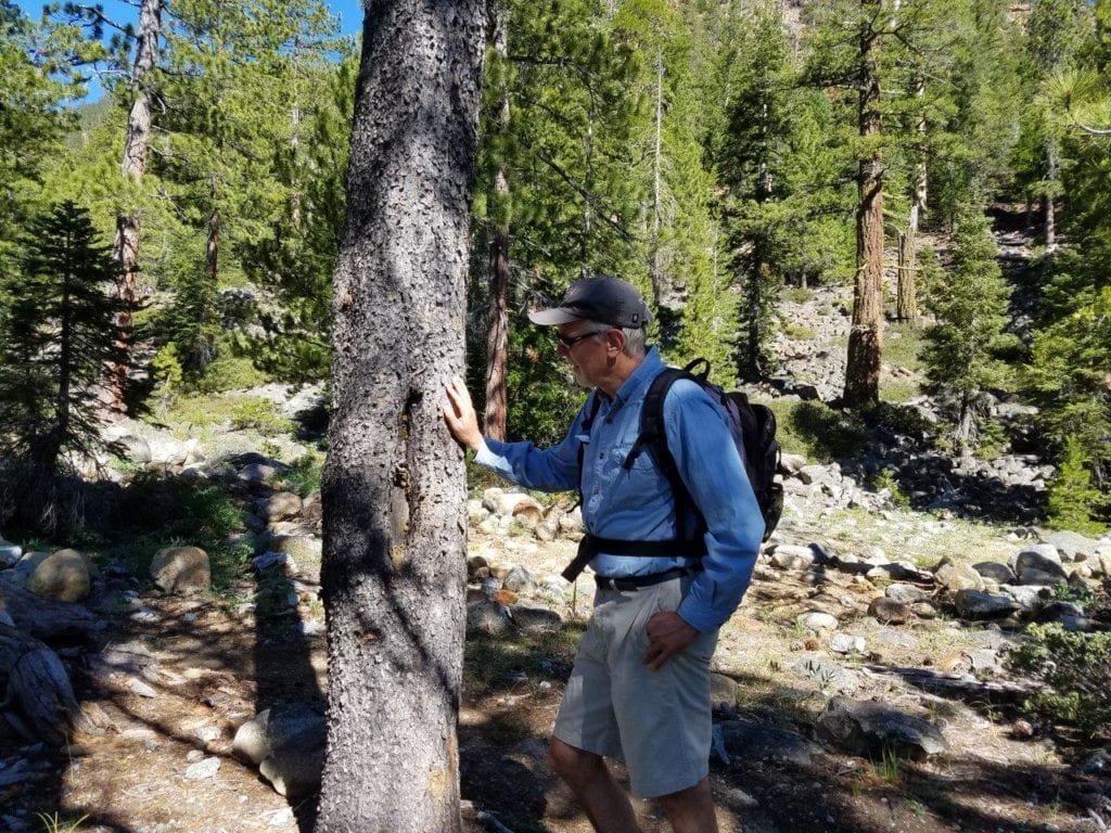 Hiker inspecting blaze