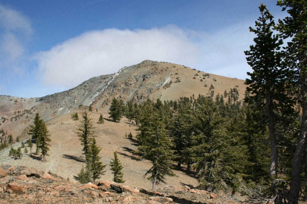 hikemtshasta.com -- foxtails pines on Mt. Eddy